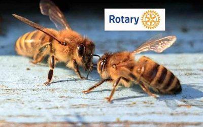 abeilles-rotary